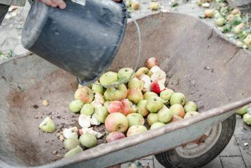 Apfelfest oder 'Work-Day' auf dem Georgenhammer