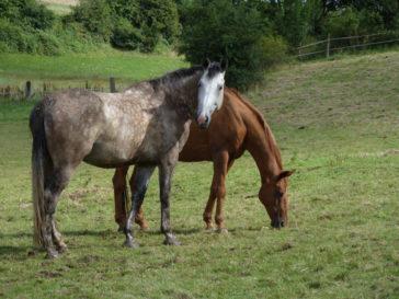 Generationswechsel im Pferdeteam