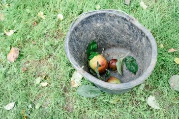 Apfelfest auf dem Hofgut Georgenhammer